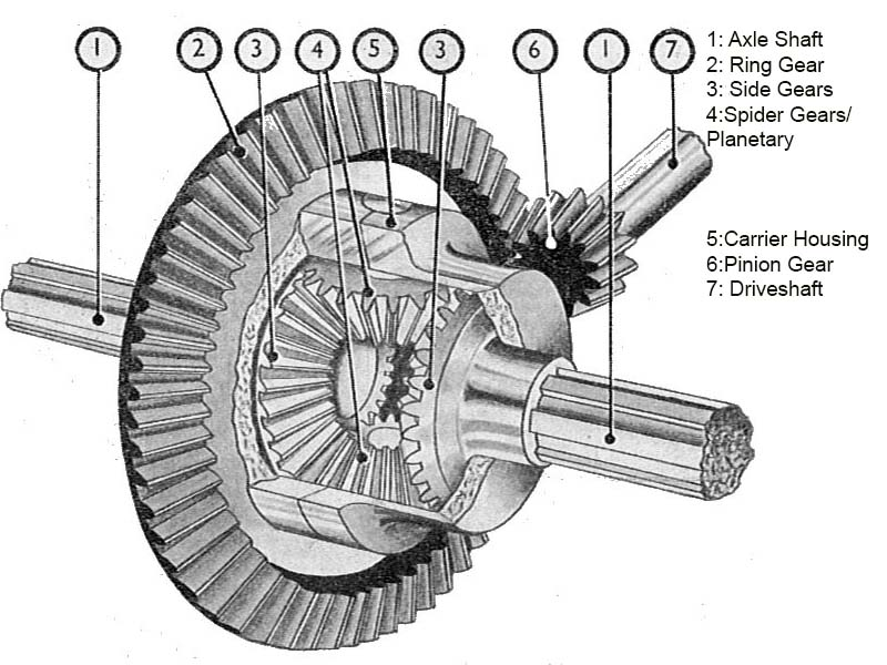 A cutaway view of a standard differential.