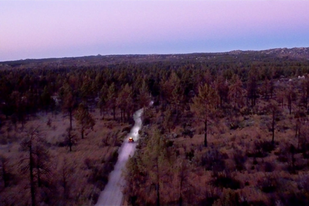 "The ""Bosque de Pinos Loop"" will take you through a beautiful pine forest."
