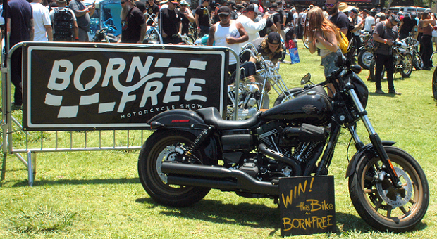 Harleys at Born Free 9th Annual Rally