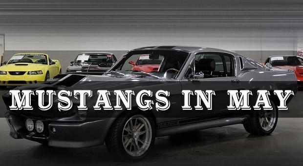 Mustangs in May