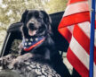 Jeep Announces #JeepTopCanine winner, Bear, Who is a GOOD DOG