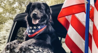 Jeep Announces #JeepTopCanine winner, Bear, Who is a GOOD DOG